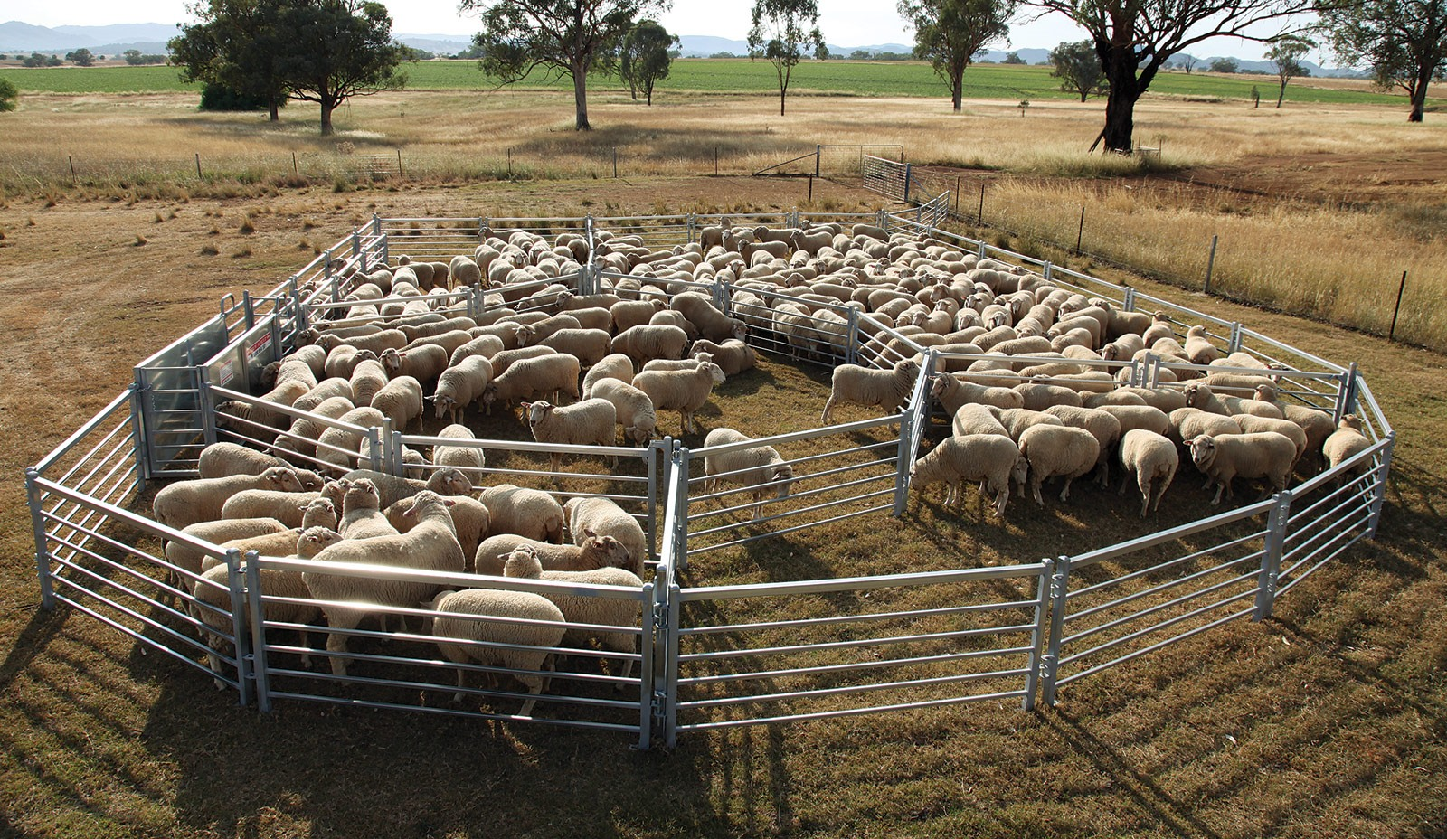 Large Cattle Yard Designs: Financing Available For All Sized Sheep