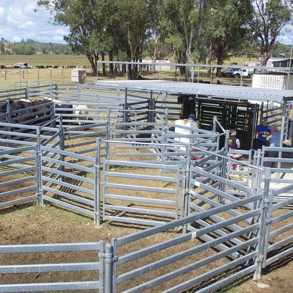 Cattle Yards Financing Available For All Sized Cattle Arrowquip